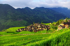 I campi a terrazze hanno circondato il villaggio Immagine Stock