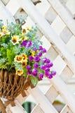 I canestri d'attaccatura fissati al muro con una gamma di estate fiorisce Fotografia Stock