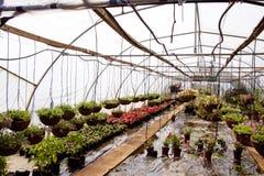 I canestri e le piante di scuola materna d'attaccatura in una serra scavano una galleria fotografie stock