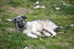 I cani, cani, cani, ritratto insegue le immagini, cani nelle razze differenti, cani di menzogne, giocando i cani, immagini dei ca Immagini Stock