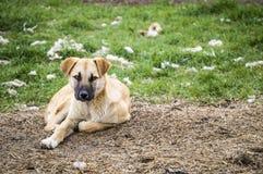 I cani, cani, cani, ritratto insegue le immagini, cani nelle razze differenti, cani di menzogne, giocando i cani, immagini dei ca Fotografia Stock Libera da Diritti