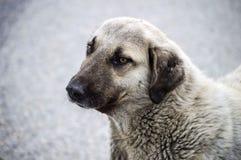 I cani, cani, cani, ritratto insegue le immagini, cani nelle razze differenti, cani di menzogne, giocando i cani, immagini dei ca Immagini Stock Libere da Diritti