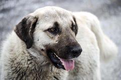 I cani, cani, cani, ritratto insegue le immagini, cani nelle razze differenti, cani di menzogne, giocando i cani, immagini dei ca Fotografia Stock