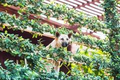 I cani danno un'occhiata alla casa sconosciuta con la copertura dell'albero Immagini Stock