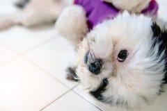 I cani di animale domestico sono svegli ed allegri Fotografie Stock