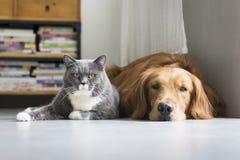I cani ed i gatti si rannicchiano insieme Fotografia Stock