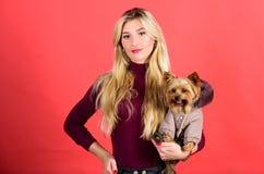 I cani hanno bisogno dei vestiti abito ed accessori Rifornimenti dell'animale domestico Vestire cane per freddo Quale cane razze  immagine stock libera da diritti