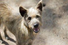 I cani selvaggi che stanno sulla via vuole l'alimentazione dalla gente fotografia stock libera da diritti