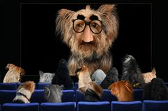 I cani stanno ascoltando una conferenza dal professor il Dott. York fotografia stock