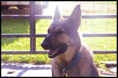 I canini sono bei fotografia stock libera da diritti