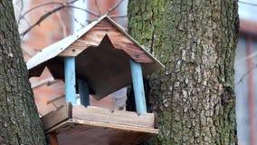 I capezzoli volano nell'alimentatore dell'uccello archivi video