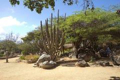 i Caraibi L'isola di Aruba Parco nazionale Arikok Fotografia Stock Libera da Diritti