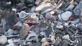 I carboni di morte nel fuoco archivi video