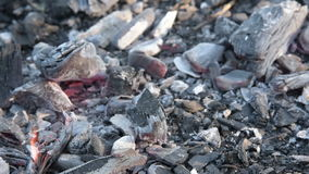 I carboni di morte nel fuoco stock footage