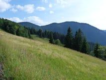 I Carpathians ucraini Immagine Stock