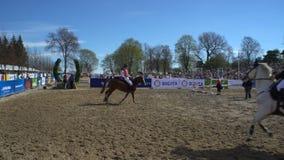 I cavalieri si scaldano i cavalli prima della prestazione stock footage