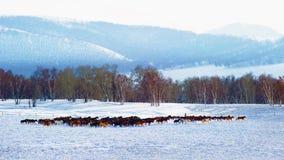 I cavalli Immagini Stock