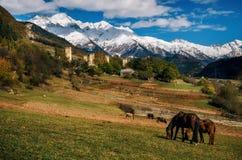 I cavalli contro Svan si eleva in Mestia, Svaneti, la Georgia Immagini Stock Libere da Diritti