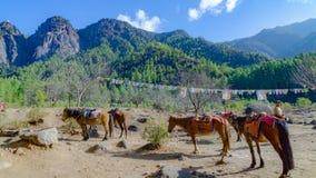 I cavalli e l'erba abbelliscono con le montagne verdi, Bhutan Fotografie Stock