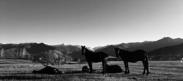 I cavalli e le mucche pascono pacificamente al tramonto fotografie stock libere da diritti