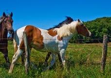 I cavalli ed i puledri liberano Immagini Stock Libere da Diritti