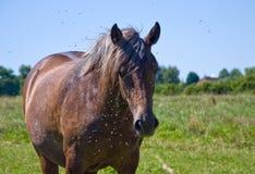 I cavalli ed i puledri liberano Immagini Stock