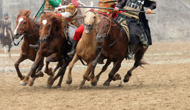 I cavalli galoppanti Fotografia Stock