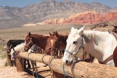 I cavalli hanno legato in su Immagine Stock Libera da Diritti