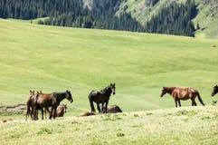 I cavalli pascono nelle montagne Immagini Stock Libere da Diritti