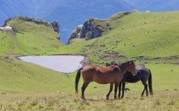 I cavalli selvaggii amano nelle montagne e nel lago con forma del cuore fotografia stock