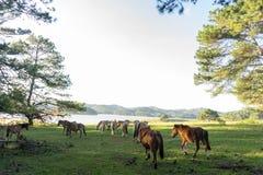 I cavalli selvaggii mangiano il vetro dal lago Fotografia Stock Libera da Diritti