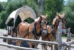I cavalli sfruttati tirano un vagone coperto fotografia stock libera da diritti