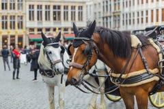 I cavalli su Grote Markt quadrano a Bruxelles Belgio Immagine Stock