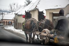 I cavalli transylvanian tradizionali stanno camminando attraverso il villaggio rumeno, immagine stock