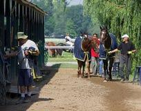 Backstretch Life at Horse Haven. Backstretch life at historic Saratoga Racecourse royalty free stock photo