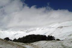 I cedri famosi della riserva di Libano sui pendii di Qurnat come Sawda nel Libano immagini stock libere da diritti