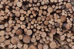 I ceppi degli alberi/hanno impilato il fondo alberi/di legno Fotografia Stock