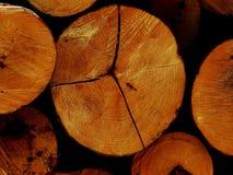 I ceppi dell'albero Immagini Stock Libere da Diritti