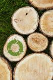 I ceppi di albero sull'erba con riciclano il simbolo Fotografie Stock