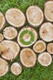 I ceppi di albero sull'erba con riciclano il simbolo Fotografia Stock