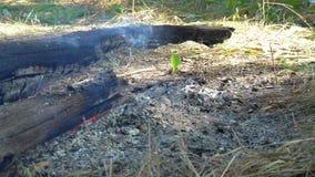 I ceppi di legno bruciano senza fiamma video d archivio