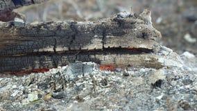I ceppi di legno bruciano senza fiamma stock footage