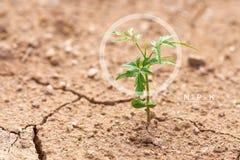 I cerchi di Infographics e la N - P - K delle piante si sviluppano sull'asciutto Immagini Stock Libere da Diritti