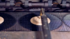 I cerchi identici di crema stanno versandi su un nastro trasportatore video d archivio