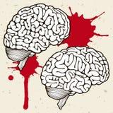 Cervelli umani Fotografie Stock Libere da Diritti