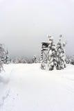 I cervi stanno - supporto dell'albero - la torre dell'allerta in montagne Fotografia Stock