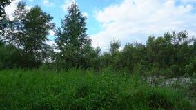 I cespugli, l'erba e gli alberi ondeggiano