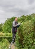 I cespugli verdi delle disposizioni di Senor recintano il giardino fotografia stock libera da diritti