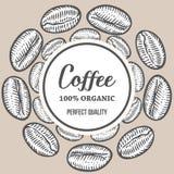 I chicchi di caffè passano l'illustrazione disegnata a mano dell'insegna di vettore della botanica Fotografie Stock