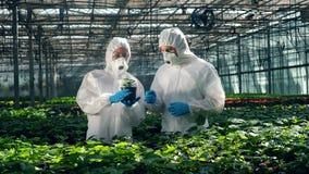 I chimici nell'usura della sicurezza stanno osservando una pianta video d archivio